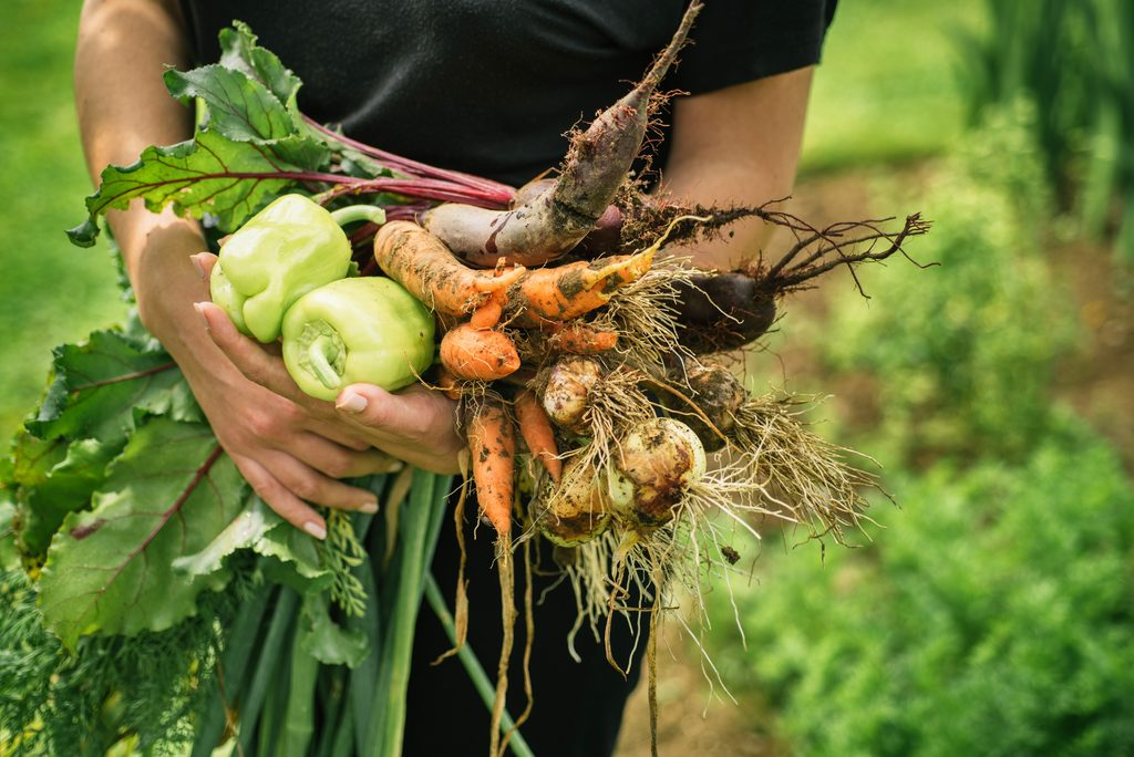 Regionales Gemüse frisch vom Feld