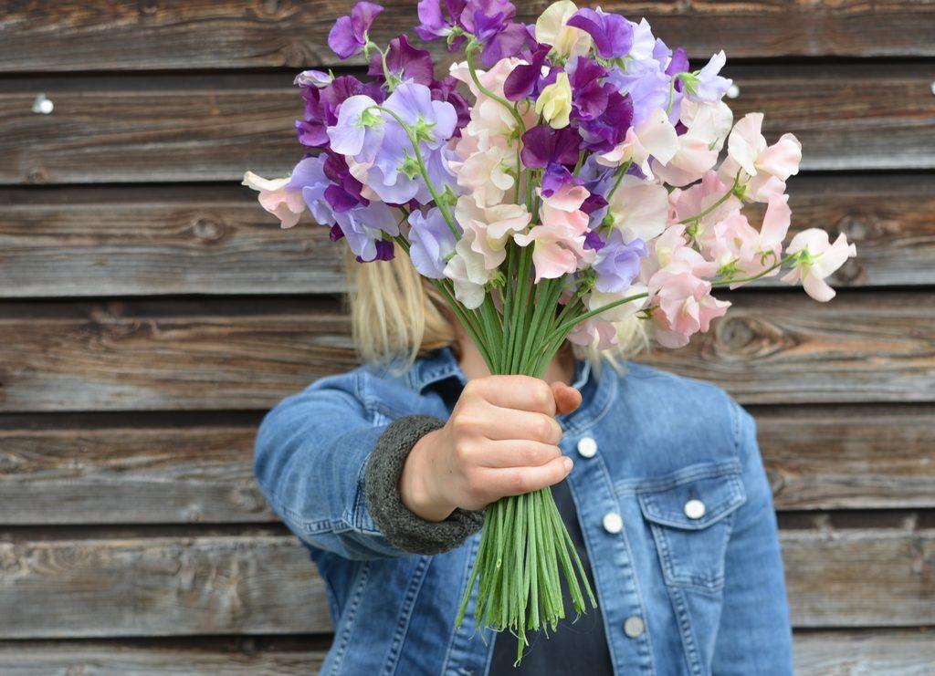 Kreuzer Pflanzen Floristik