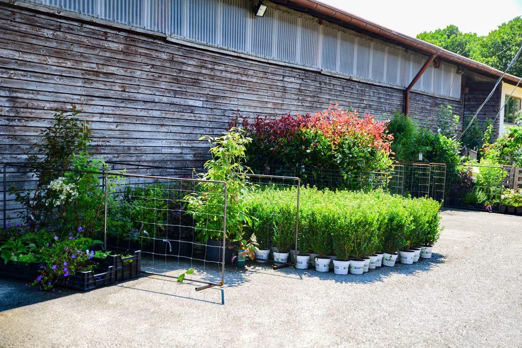 Kreuzer Pflanzen  Lieferservice