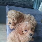 Fred und Franky 6 Wochen alt