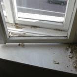 Holzkastenfenster aufarbeiten, neue Fensterbretter