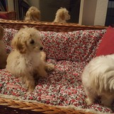 Karla mit Bella und Benny