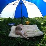 Sunny am See :)
