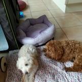 Franky und Bella