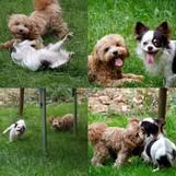 Gino mit seinem Hundefreund
