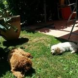 Franky und Bella, beste Freunde:)