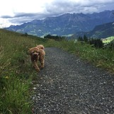 Unser Berg - Hund Finja