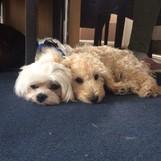 Karla und ihr Freund Benny