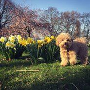Gino begrüßt den Frühling