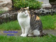 Katze mit dem Namen Mitze