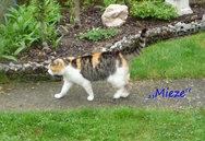 Katze mit dem Namen Mieze