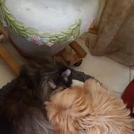 Gimmy mit Katze im Korb :)