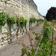 Weinwand an der Klostermauer