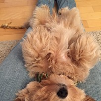 Gino ganz entspannt auf Victoria´s Beinen