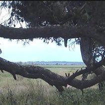 Blick durch's Baumfenster