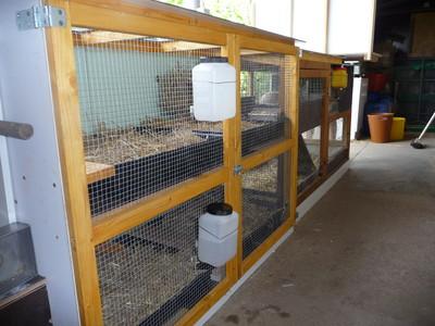 Artgerechtes gehege, Werntal-zwerge, neu, schön, Kaninchengehege, kaninchenstall, artgerechter kaninchenstall