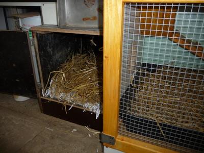 Artgerechtes gehege, Werntal-zwerge, neu, schön, Kaninchengehege, kaninchenstall, artgerechter kaninchenstall, wurfbox