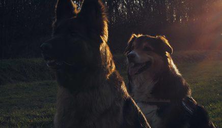 4K Filmproduktion in Zeitlupe mit Hunden