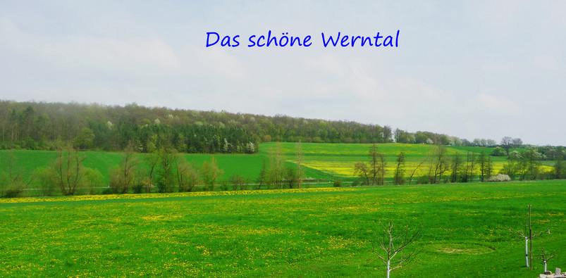Werntal-Zwerge, Werntal, Löwenzahnwiese, Wiese, Kanincheniese, Wern